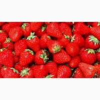 Компанія Bionerica закупляє полуницю (клубніку) для заморозки