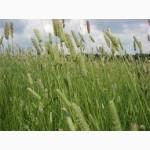 Продам смесь многолетних трав На пастбище (На пасовище)