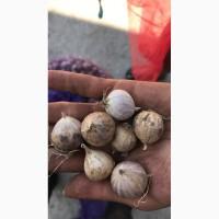 Продам чеснок яровой, озимый, воздушку на посадку, чеснок на переработку, овощехранилище