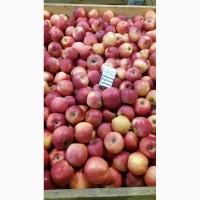 Продам яблука, виноград ОПТ з холодильника