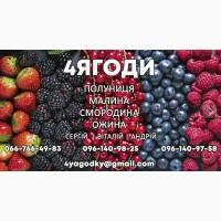 Продам саженцы Ежевики без игол, крупная ягода, саженцы 1-3 годичные