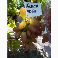 Виноград саженец Юлиан