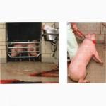 Аппарат (щипцы) оглушения свиней КОМА STZ5