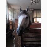 Продам лошадку