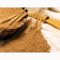 Компания на постоянной основе закупает Пшеницу от производителя, на условиях поставки CPT