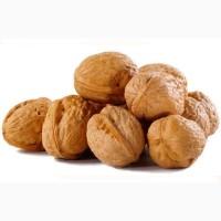 Закупаем Грецкий орех (кругляк)