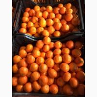 Продаем мандарины Клементин оптом мелким оптом