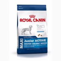 Royal Canin Maxi Junior Active (до 15 месяцев) 15кг