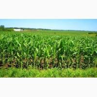 NEW насіння кукурудзи: Вакула, Онікс, Яніс (посівний матеріал)