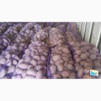 Продам картофель оптом со склада