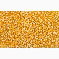 Закупляємо зернові по всій Україні