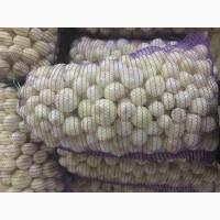Продажа лука очищенного оптом и крупным оптом