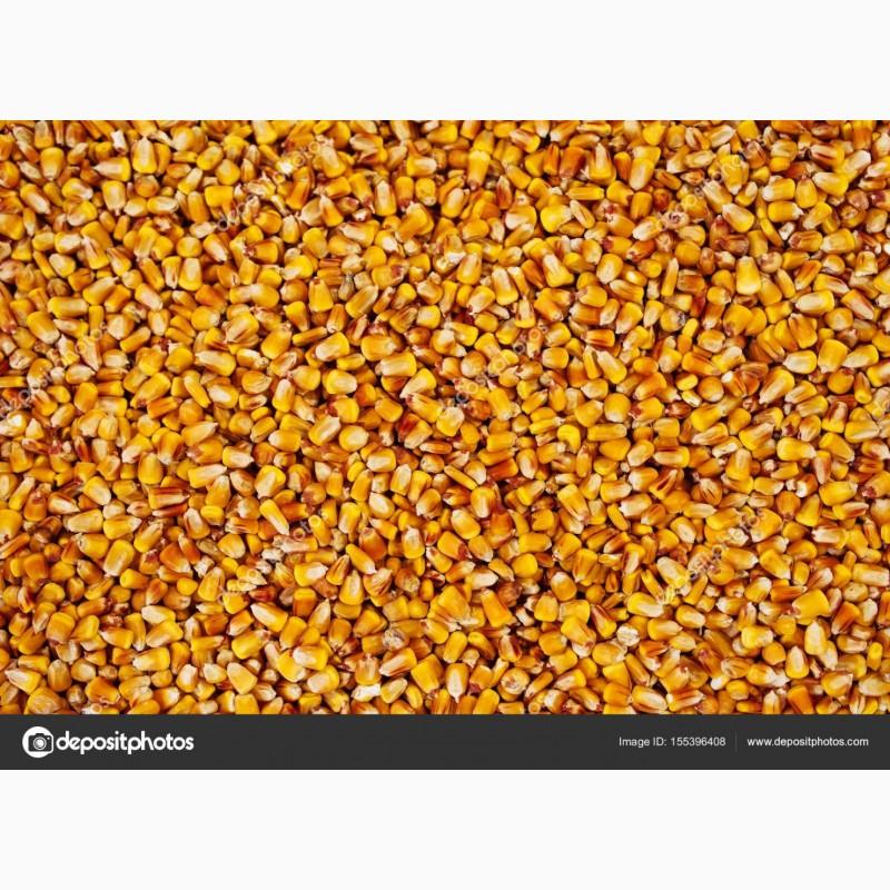 Продовольственное зерно элеваторах ремень тнвд фольксваген транспортер т4 купить в