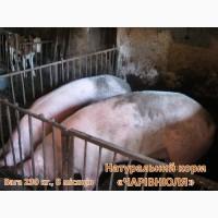 Еко-корм «Чарівнюля» для свиней, худоби та курей