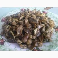 Мясо виноградной улитки (нога), замороженное в брикетах 1/ 1, 5/2 кг