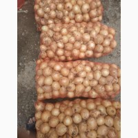Предлагаю оптовым поставкам новый лук урожай 2020г продукции из солнечного Узбекистана
