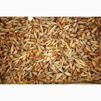 Зерновые, бобовые, некондицию, зерноотходы куплю дорого