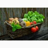 Якісне Насіння Овочевих Культур, для фермерів, та приватних садиб