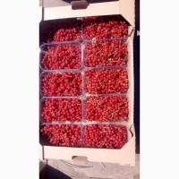 Продам ягоды красной смородины (поричка)
