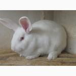 Продаються кролі різних порід