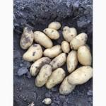 Продам картоплю Луцьк