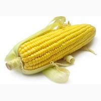 Куплю кукурузу ДСТУ. Вся Украина