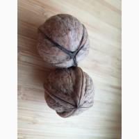 Закупаем мелкий грецкий орех -28