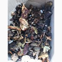 Продам сухі гриби