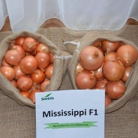 Продаємо професійне насіння цибулі