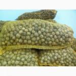 Продам кругляк грецкого ореха 20 грн урожай 2019 г