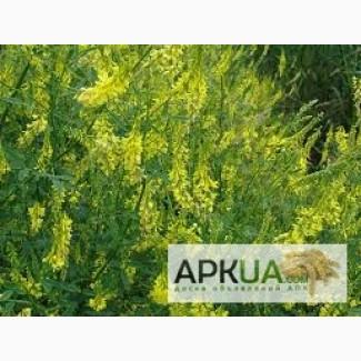 Продам семена донника желтого двухлетнего (буркун-укр.)