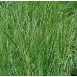 Продам смесь многолетних трав Сенокосная