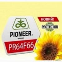 Гибрид подсолнечника PR64F66/ПР64Ф66 CRUISer