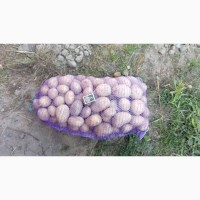Продам картоплю, сорт Бельмондо