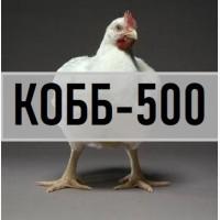 Бройлер крос КОББ-500 з Угорщини. Вихід від 80% (ціна 13 грн) Інкубаційні яйця кобб 500