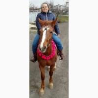 Продам лошадь, упряжная кобыла
