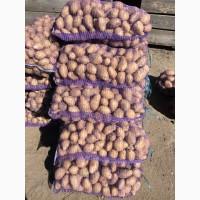 Продаётся картофель белых и красных сортов от производителя ФХ «БОРОДЮК»