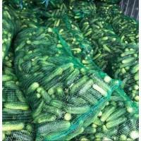 Продам огурец грунтовый оптом урожай 2021 года