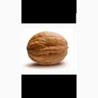 Продам греческий орех.хмельницк