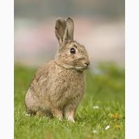 Продам комбикорм для кроликов г. Днепр