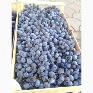 Продам виноград МОЛДОВА