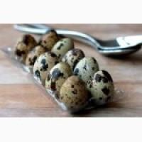 Продам перепелинное яйцо пищевое