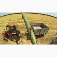 Зерновая компания закупает Пшеницу