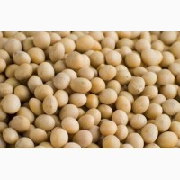 Соя ГМО Не ГМО Экспорт