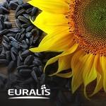 Подсолнечник Евралис ЕС Биба