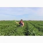 Семена сои для всей Украины