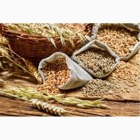 Оптовые закупки сои, пшеницы, кукурузы, подсолнечника и др