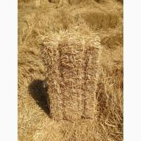Продам Солому в ТЮКАХ крупно-стебельную озимой пшеницы