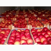 Яблоки опт экспорт