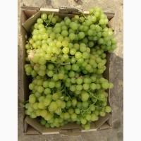 Суперцена(5.9грн) и качество!Продам виноград СТОЛОВЫХ сортов с собственных виноградников